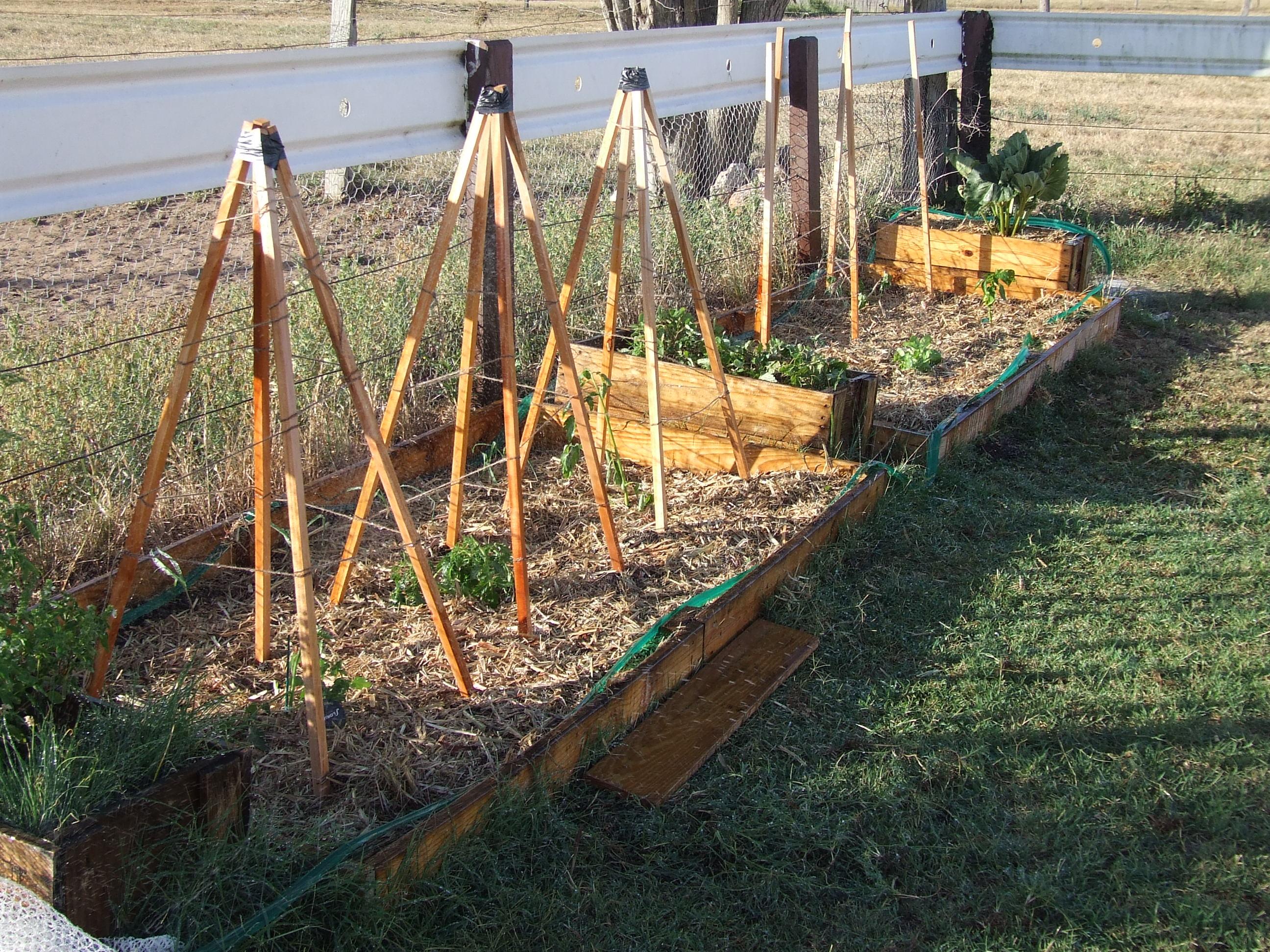 Potager vegie patch paris bourke - Petit jardin quel arbre planter paris ...
