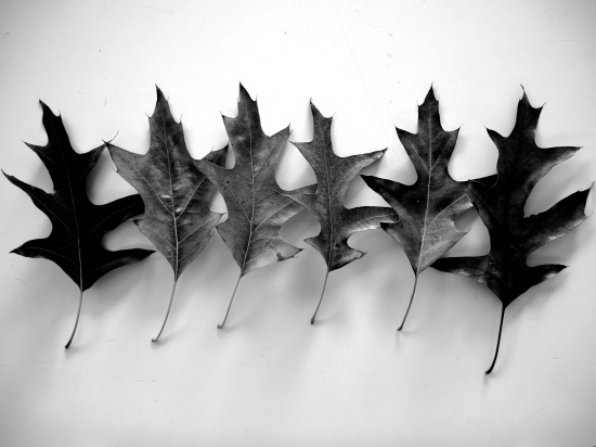 Autumn Leaves Black &White