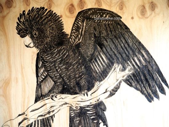 black cockatoo charcoal