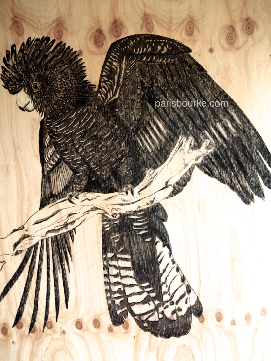 black cockatoo charcoal 2
