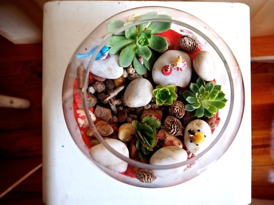 terrarium pour enfants